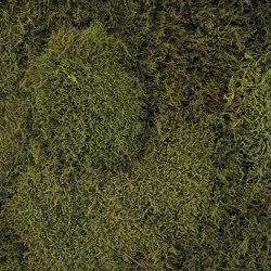 Flachmoos dunkelgrün | Living / Green walls | StoneslikeStones