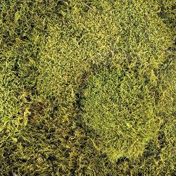 Flachmoos hellgrün | Living / Green walls | StoneslikeStones