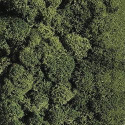 Islandmoos dunkelgrün | Living / Green walls | StoneslikeStones