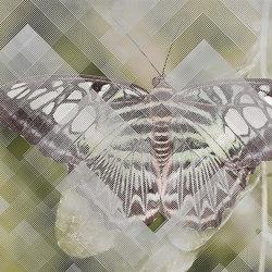 Moth | Wall coverings / wallpapers | WallyArt