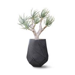Bhaca Medium | Plant pots | Indigenus