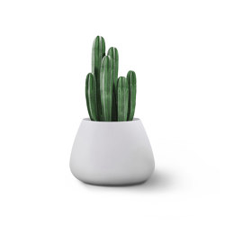 Tuber Small Stone   Plant pots   Indigenus
