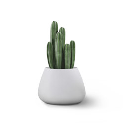 Tuber Small Stone | Plant pots | Indigenus