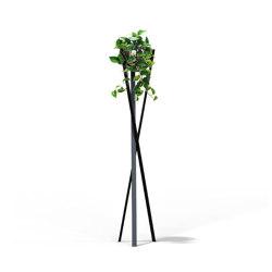 Globe | Protea | Plant pots | Bloss