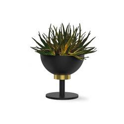 Maxi   Dry   Plant pots   Bloss
