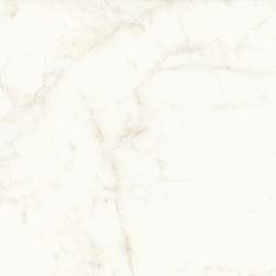 Marvel Shine Calacatta Delicato 120x120 Lapp | Ceramic tiles | Atlas Concorde