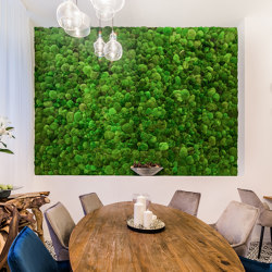 Moss Wall Ball Moss | Sound absorbing objects | Ekomoss