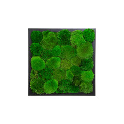 Rectangular Moss Picture | Moss Picture With Ball Moss 40X40 | Sound absorbing objects | Ekomoss