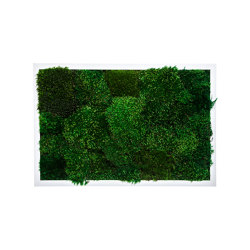 Rectangular Moss Picture | Moss Picture With Provence Moss 40X40 | Sound absorbing objects | Ekomoss