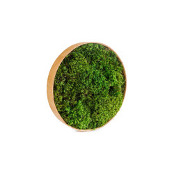 Round Moss Pictures | Moss Picture With Provence Moss 30 cm | Sound absorbing objects | Ekomoss
