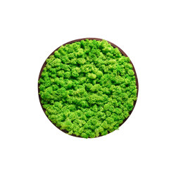Round Moss Pictures | Moss Picture With Reindeer Moss 50 cm | Sound absorbing objects | Ekomoss