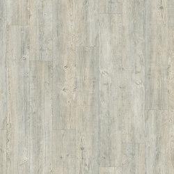 Moduleo 55 Woods | Latin Pine 24242 | Planchas de plástico | IVC Commercial