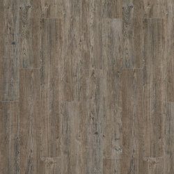 Moduleo 55 Woods | Latin Pine 24868 | Lastre plastica | IVC Commercial