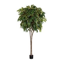 Artificial Plants | Longifolia | Artificial plants | Götessons
