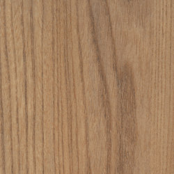 Salisbury Elm Natural | Planchas de madera | Pfleiderer