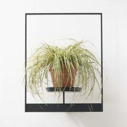 TEEpots Floating Plant Shelf | Flower displays | Teebooks