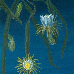 Hilocereus Night Blue   Wall art / Murals   TECNOGRAFICA