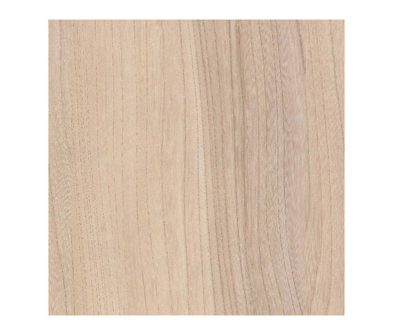 Baron Elm de Pfleiderer   Planchas de madera