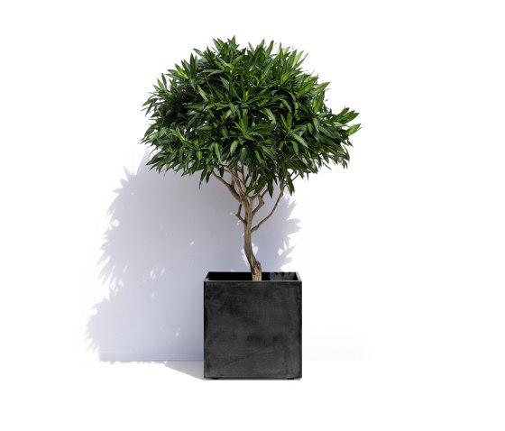 Geneva by Cosapots | Plant pots