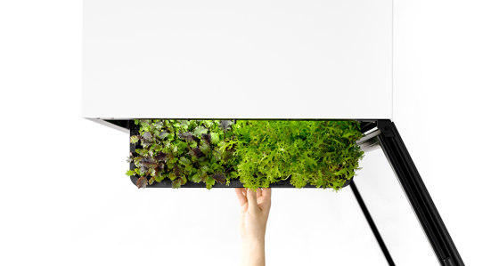 Plantcube by agrilution | Kitchen cabinets