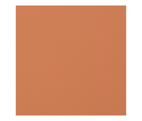Allante | Butterscotch by Morbern Europe | Faux leather