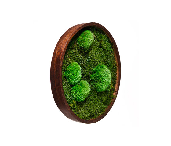 Round Moss Pictures   Moss Picture With Ball Moss And Flat Moss 50 cm by Ekomoss   Sound absorbing objects