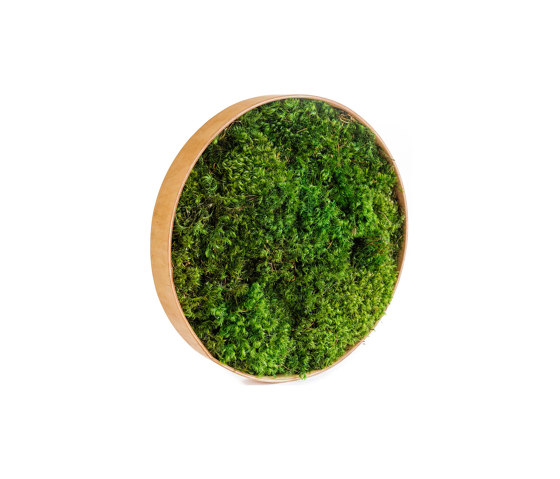 Round Moss Pictures | Moss Picture With Provence Moss 30 cm by Ekomoss | Sound absorbing objects