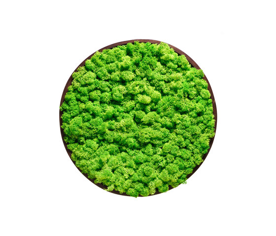 Round Moss Pictures | Moss Picture With Reindeer Moss 50 cm by Ekomoss | Sound absorbing objects