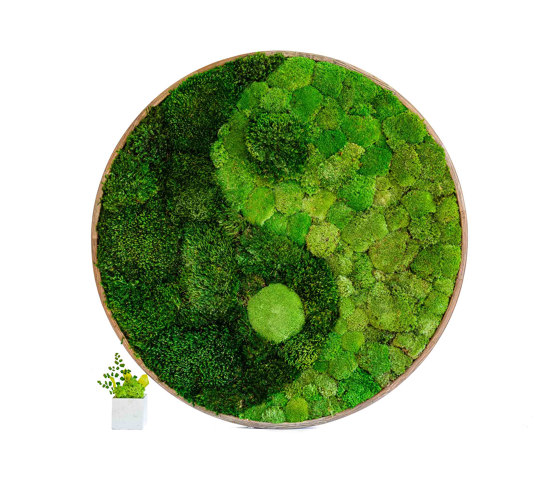 Round Moss Pictures | Yin Yang Moss Picture With Ball Moss And Provence Moss by Ekomoss | Sound absorbing objects