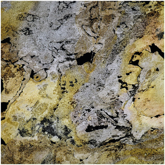 Translucent | Falling Leaves by Slate Lite | Wall veneers