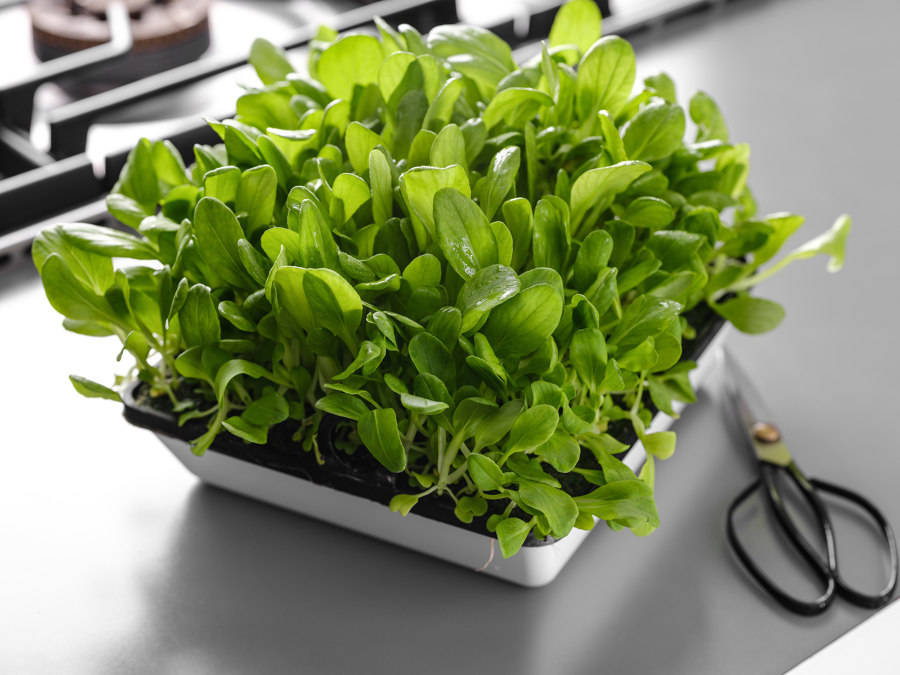 Are you getting your greens?: Agrilution Plantcube | News