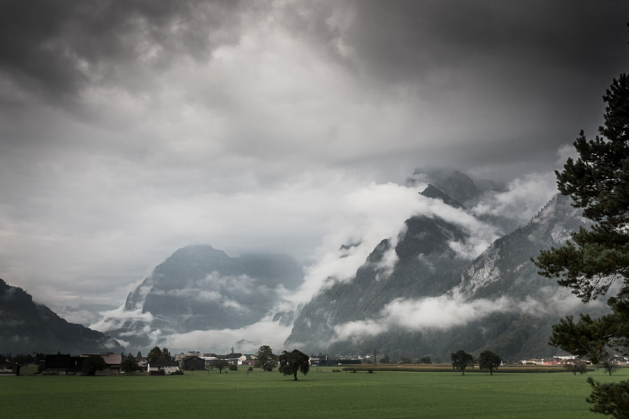 INTO THE WOODS: HORGENGLARUS | News