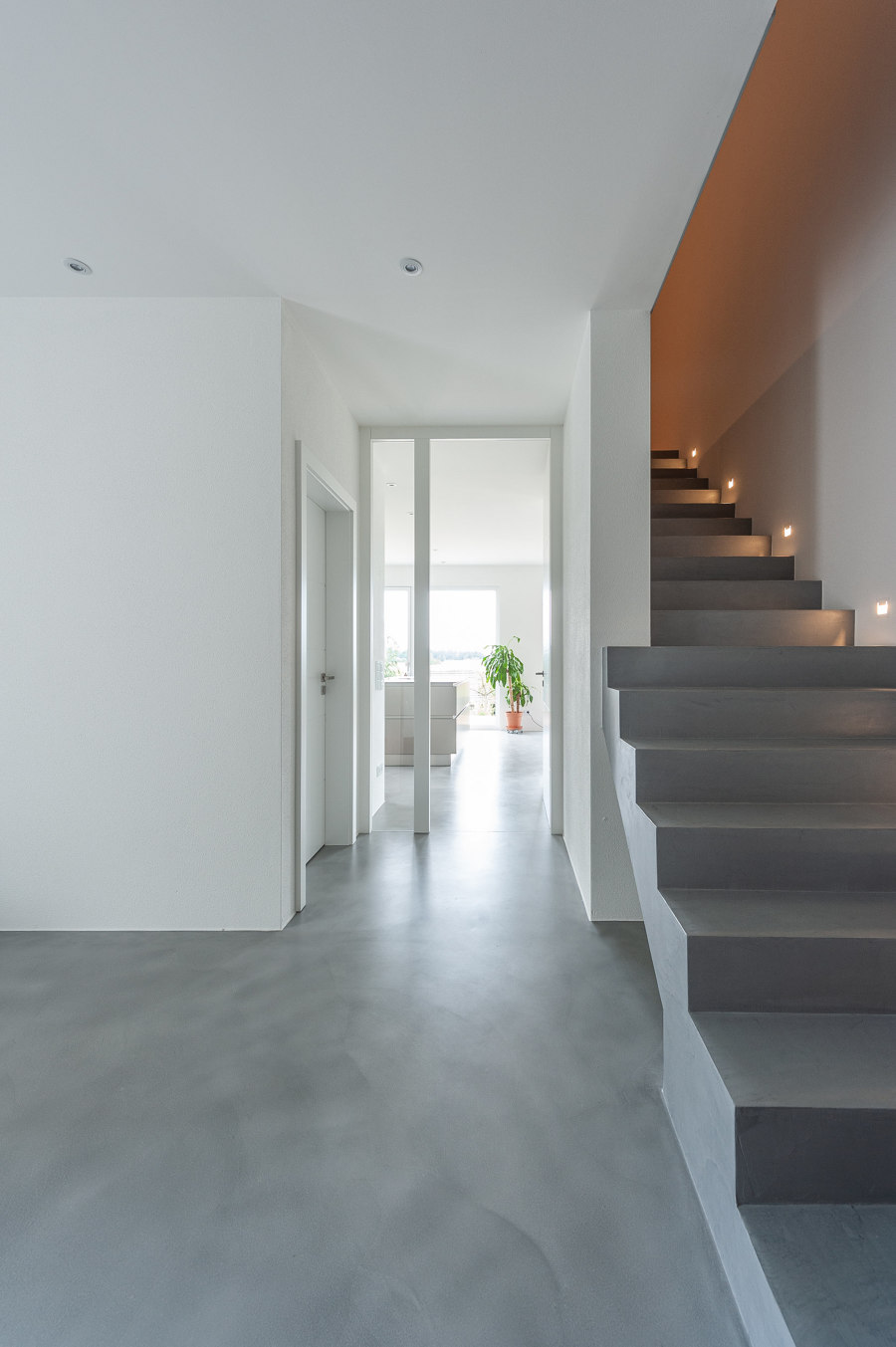 Going up the walls: Pandomo | News