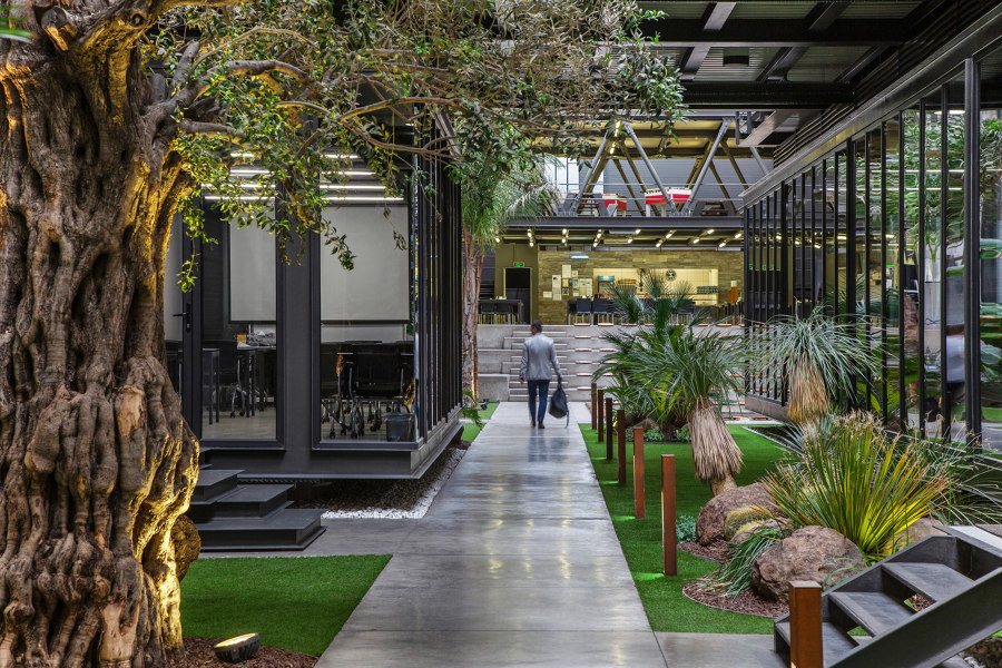 The benefits of green office spaces   News